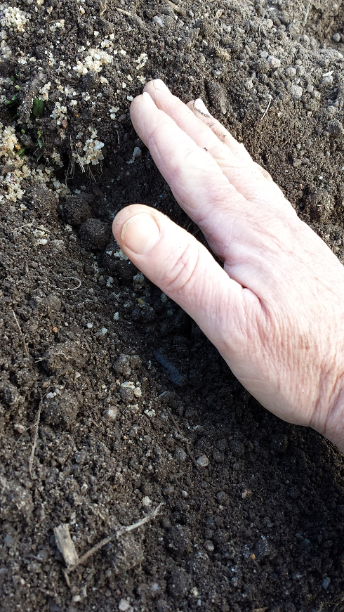 Dark, rich, healthy looking soil
