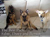 The Brat Pack: Sabre, Darcy and Benson