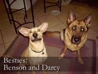 Besties: Benson and Darcy