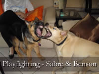 Playfighting - Sabre & Benson