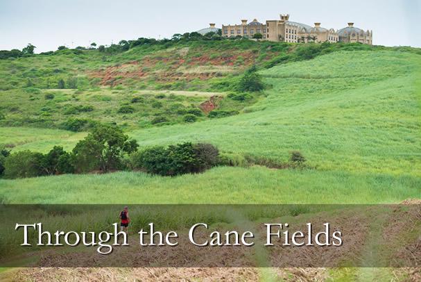 Through the Cane Fields