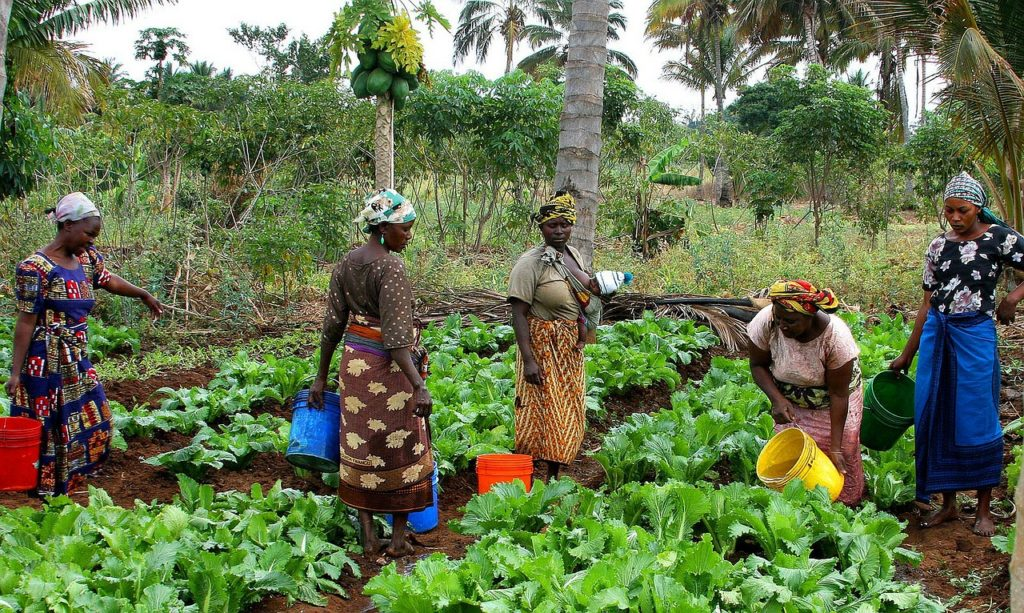 Common Fund for Commodities: Funding Innovation to Support Commodity Development Activities
