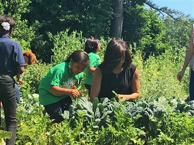Harvesting with the First Lady