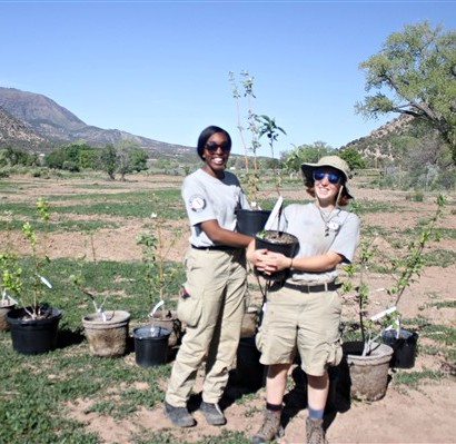 Gold Medal Orchard Planting