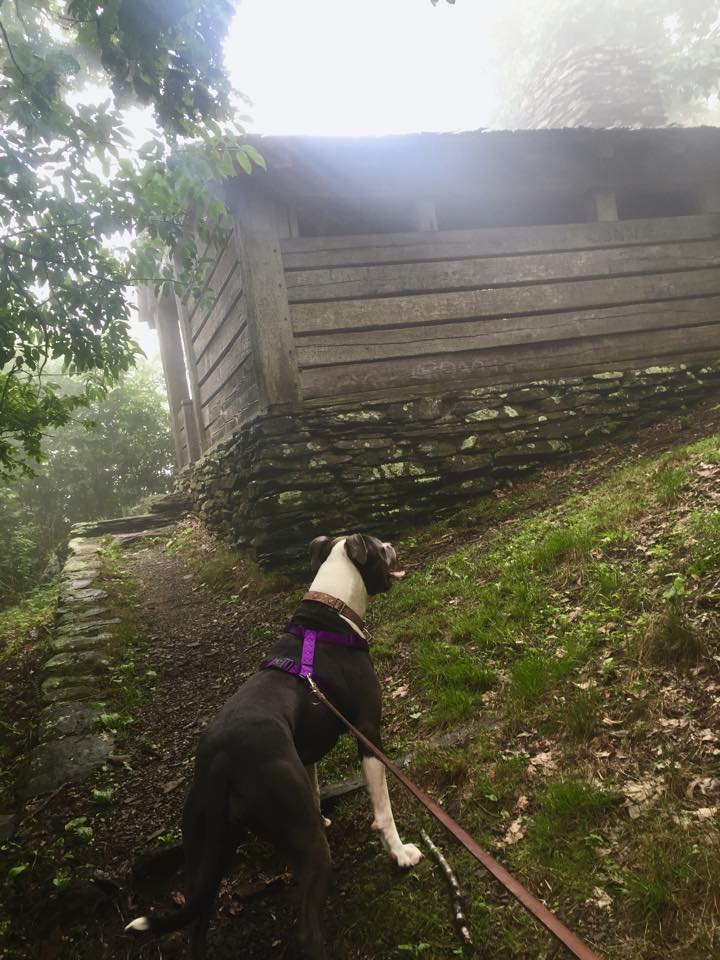 OLD APPALACHIAN TRAIL SHELTER ON  ROCK CASTLE GORGE TRAIL.  PHOTO COURTESY OF TONY GREATOREX.