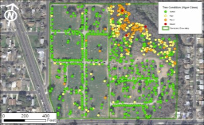 Tree condition data from Evergreen Cemetery