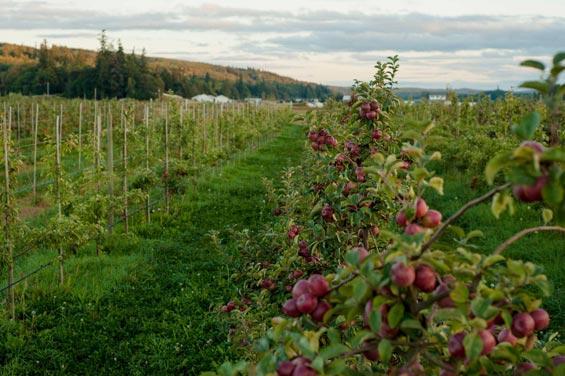 Wine & Cider Harvest Tour