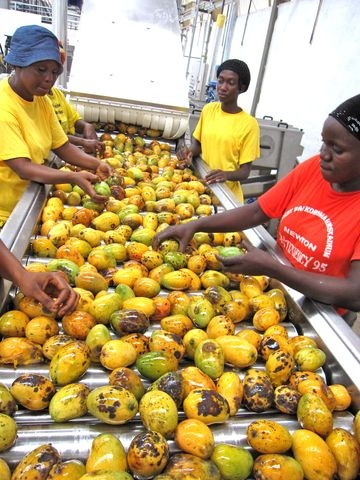 Africa Felix Juice Plant, FIRST STEP Sierra Leone