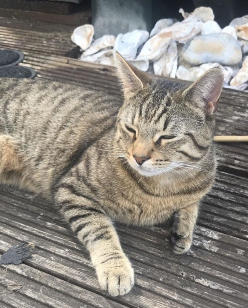 Leo, missing cat