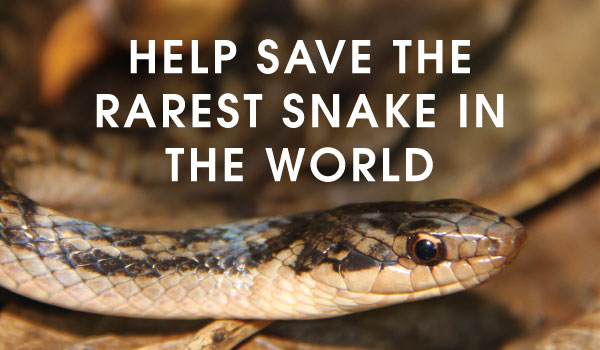 Help Save The Rarest Snake in The World