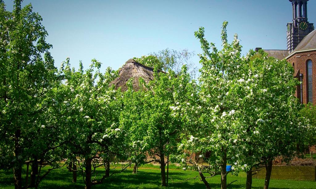 bloei winssen boomgaard arend