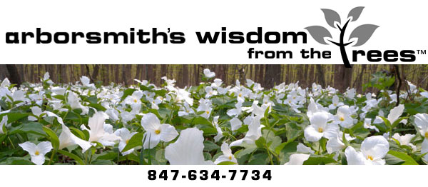 Arborsmith's Wisdom from the Trees Newsletter