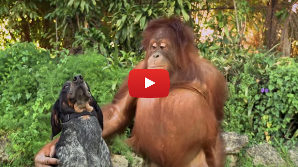 Aww...15 Unusual Animal Friendships to Make You Melt