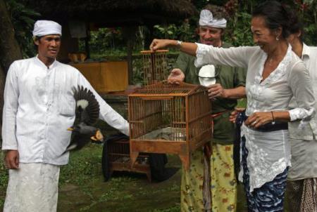 photo Javan myna bird release