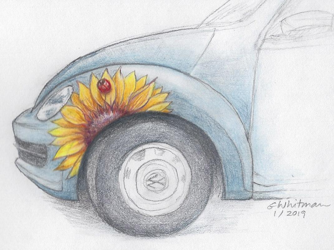 GWhitmanVWSunflowerSketch