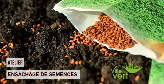Atelier d'ensachage de semence