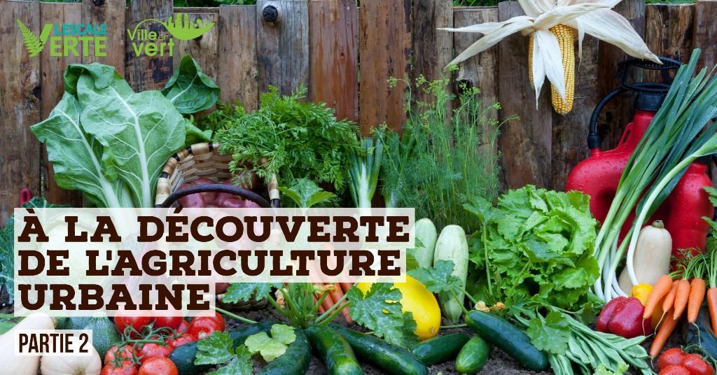 À la découverte de l'agriculture urbaine - partie 2