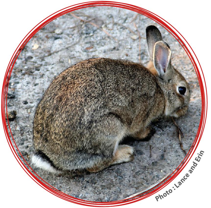 Si vous avez des questions au sujet de la biodiversité urbaine, contactez Marc Sardi marc@ecoquartier.ca
