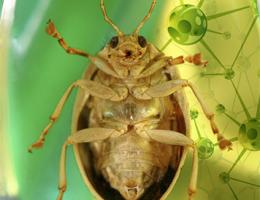 Pesticides: quelles alternatives?