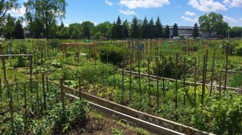 Réinscription pour les Jardins communautaires