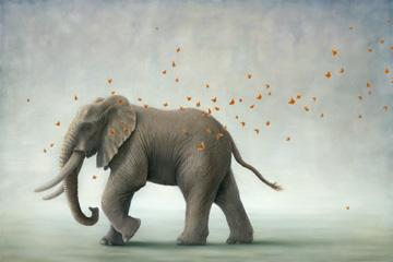 Hero I (Elephant)