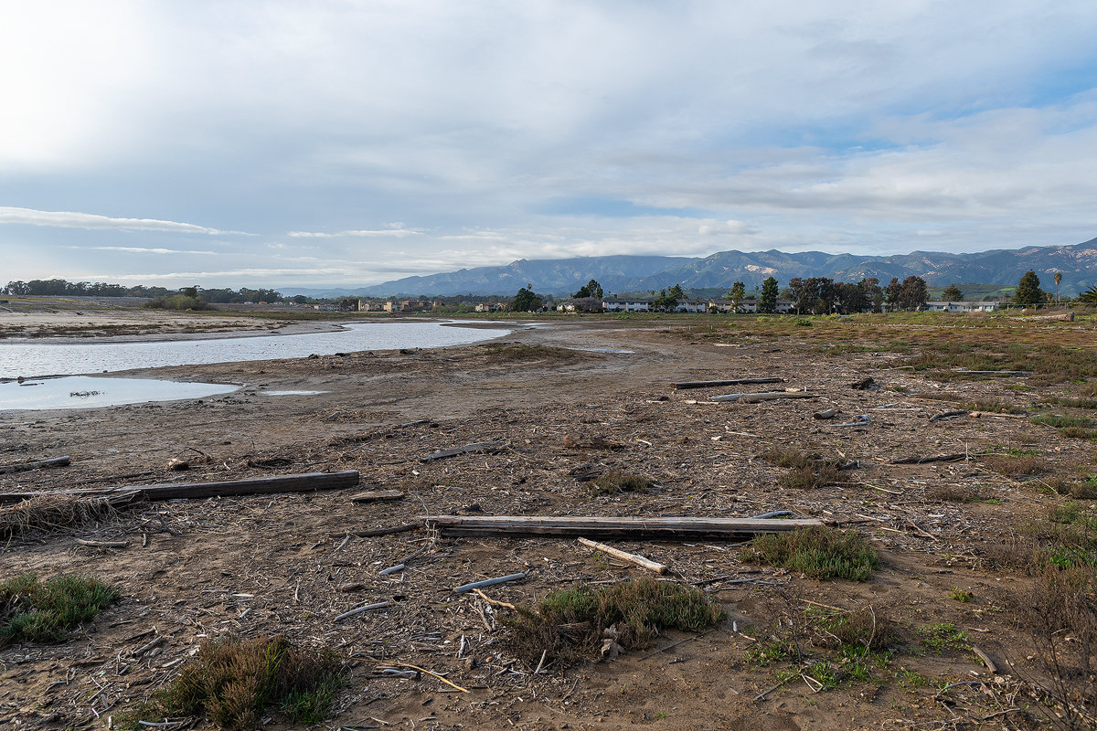 Wrack comprised of driftwood, kelp and other pieces of dead vegetation now line the shores of NCOS thanks to the recent king tides.