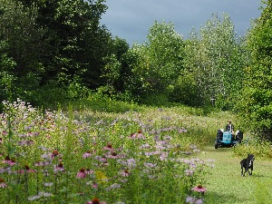 Meadow blooming, tractor, dog
