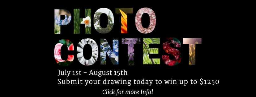 PHOTO CONTEST SUBMIT DRAWINGS--WIN CASH $$