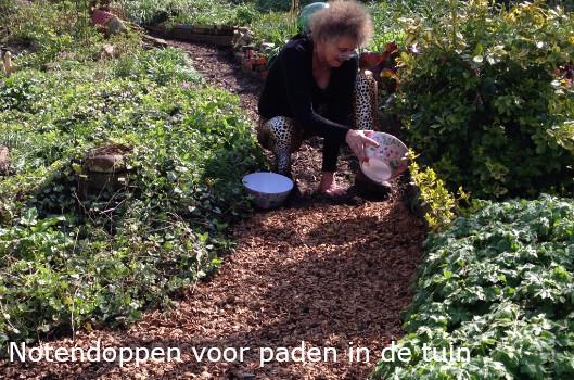 notendoppen in de tuin