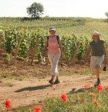 Walking in Burgundy amongst the vines