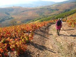 Beaujolais Guided Walking