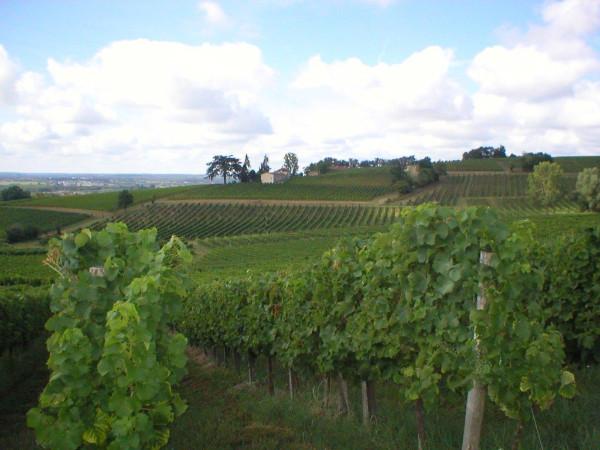 Bordeaux Classic Wine Trail