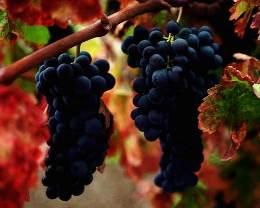 Beaujolais Wine Trail