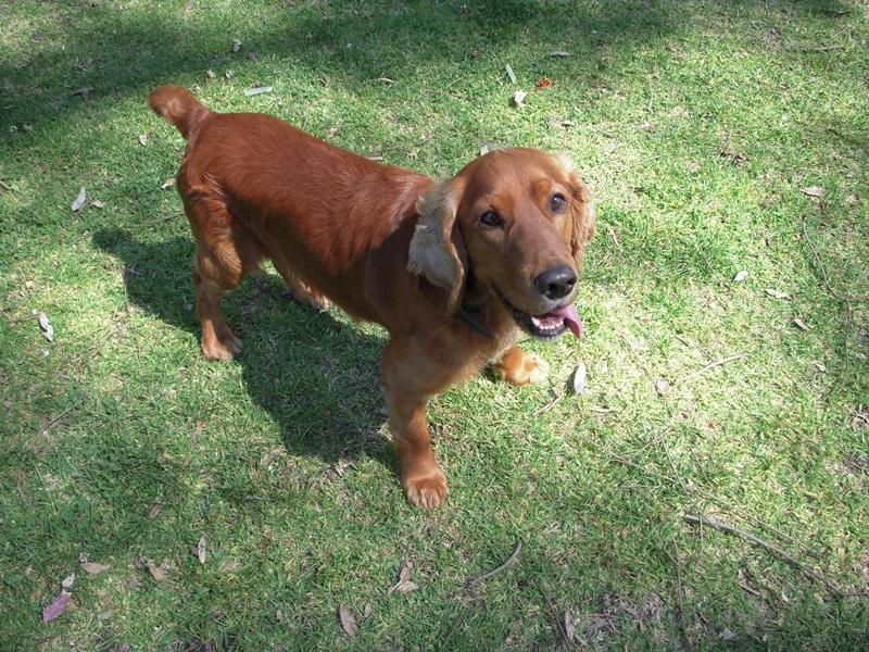 NARIP Executive Dog Haribo