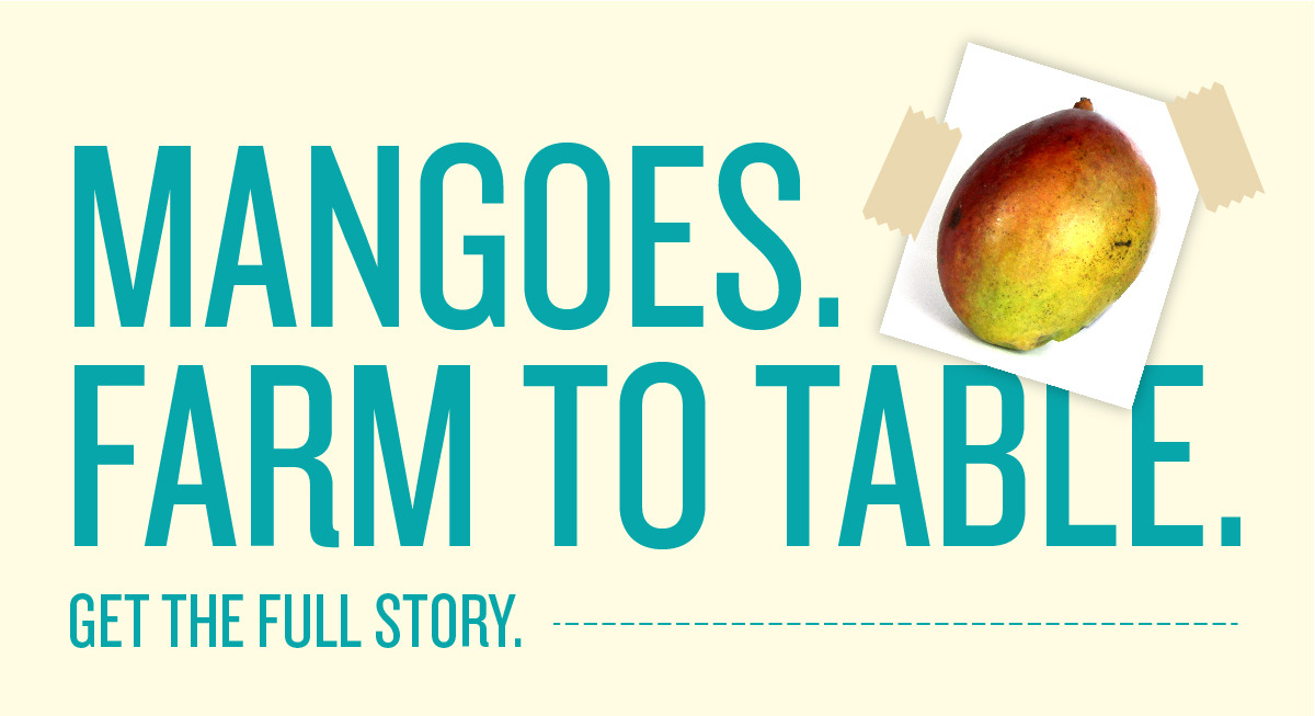 Mangoes. From Farm to Table.
