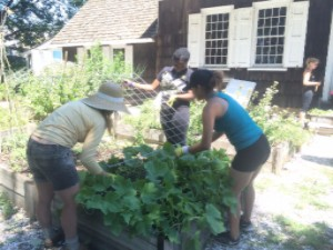 A volunteer from East Flatbush Village plants flowers out front