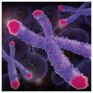 Image of Chromosomes and Telomeres
