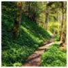 Picture of Wooded Path