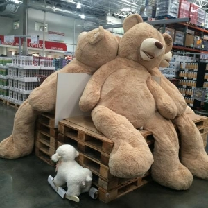GIANT BEARS AT COSTCO!