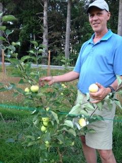Glen harvests first apples