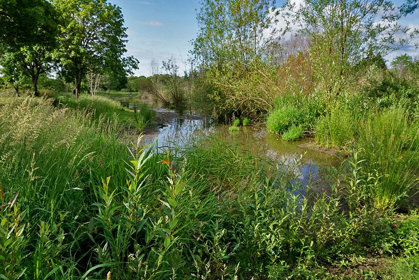 Fanno Creek wetlands