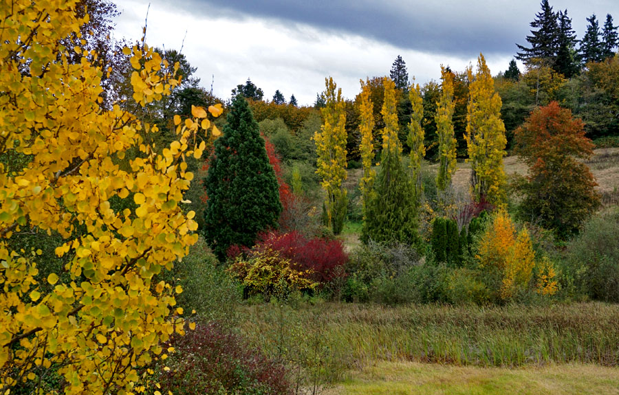 Autumn in the NW