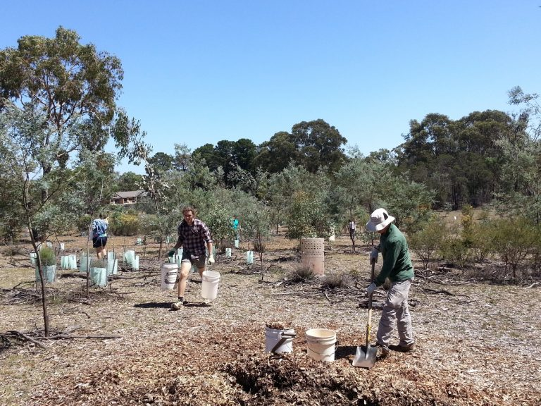 Friends of Mount Majura (FoMM) Newsletter - March 2019
