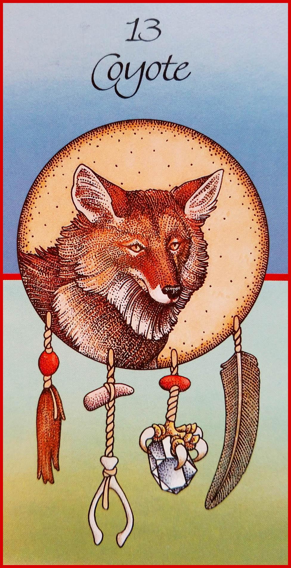 Coyote Medicine Card
