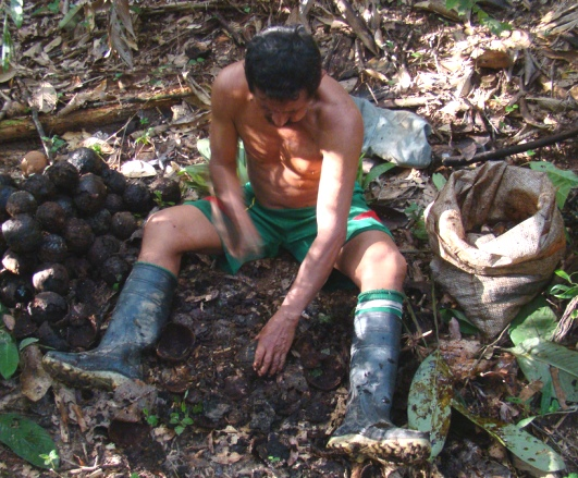 Tacana man with Brazil nuts