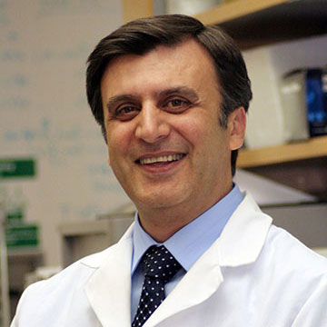 New form of immune cell has implications for treating cancer