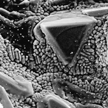 Image from the TEM