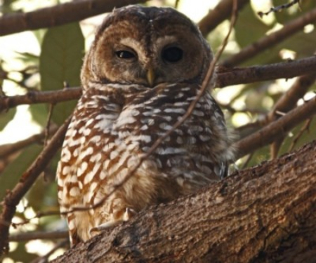 ©GoochGoodwin. Save the Mexican spotted owls' home in the Patagonia Mountains.