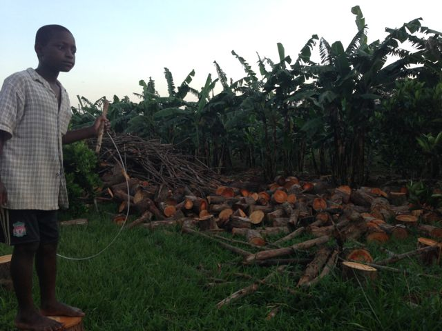 Nico surveys piles of firewood