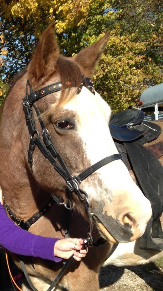 Moonshine in SpecTACKular Horse Tack